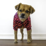 Pink Zebra jacket from Spark Paws